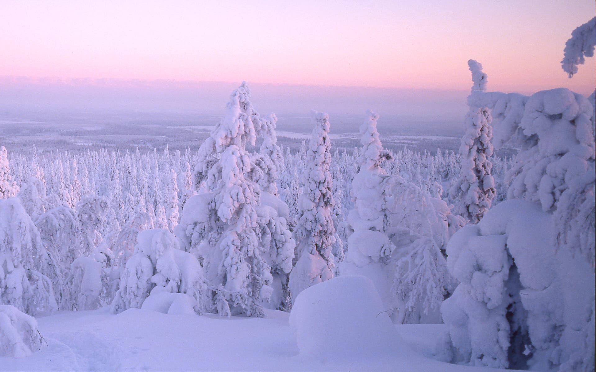 Landscape |Ruka-Kuusamo